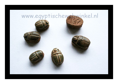 Small brown scarabs